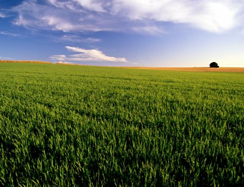 Plano Safra 2015-2016 e seguro agrícola