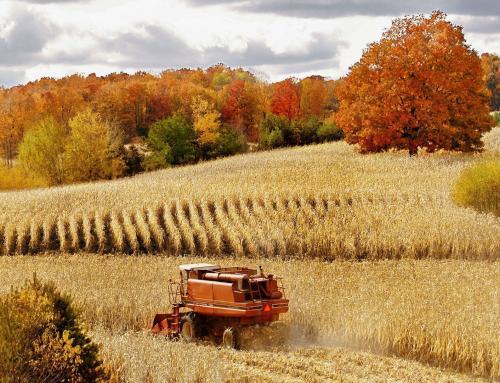 Mapa vai liberar R$60 milhões para seguro segunda safra do milho
