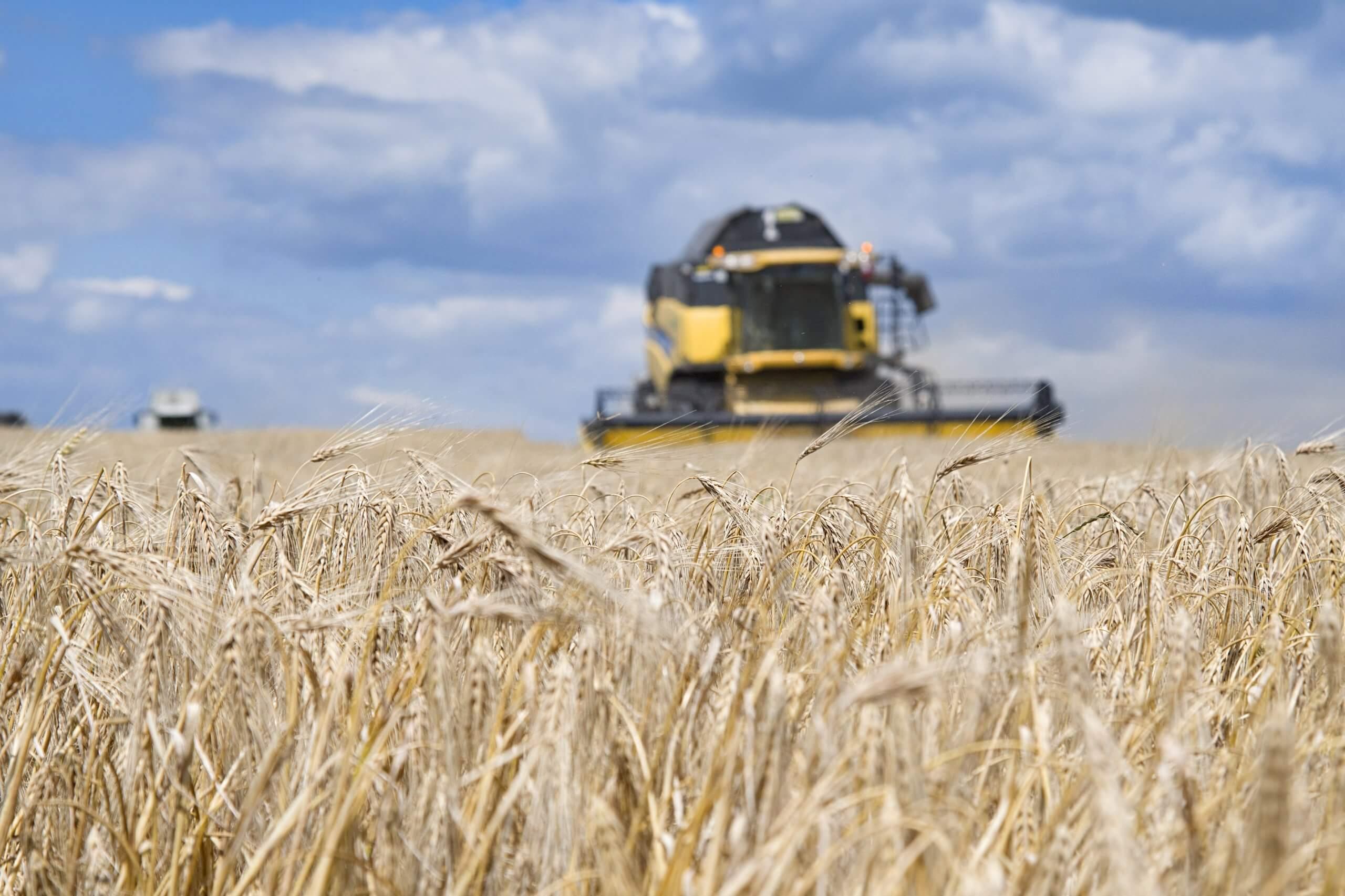 seguro agrícola colheita